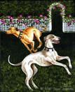 Rose Garden Frolic - Greyhound Dog Painting