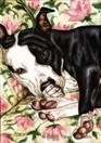 Sofa Siesta - Staffordshire Terrier Dog Art Painting