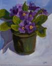Purple Primrose 1 and 2
