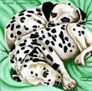Daily Painting #202 - Two Little Peas in a Pod - Dalmatian Puppy Art