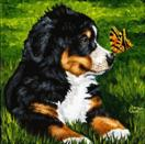 Daily Painting #203 - Little Miracles - Bernese Mountain Dog Art