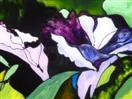Morning Glories of Half Moon Bay, painting on glass