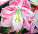 Pink Amaryllis  floral flower oil painting