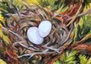 Mourning Dove's Nest