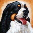 The Shoebox Dog Show Series:  'Bernese Mountain Dog - Portrait #3'