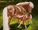 Kate's Foal - Spring is Here