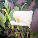Calla Lilies by Barbara Haviland floral