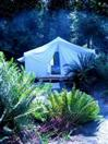 Tent in the Ferns