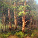 Spring Aspen Grove Trees by BECKY JOY